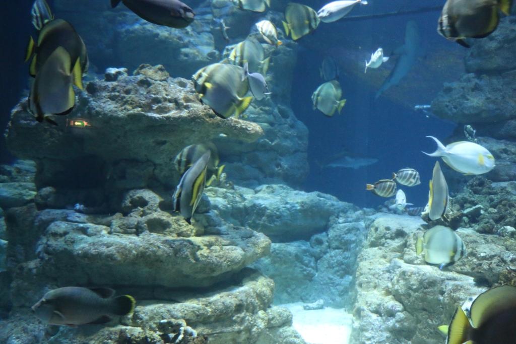 aquarium-de-paris