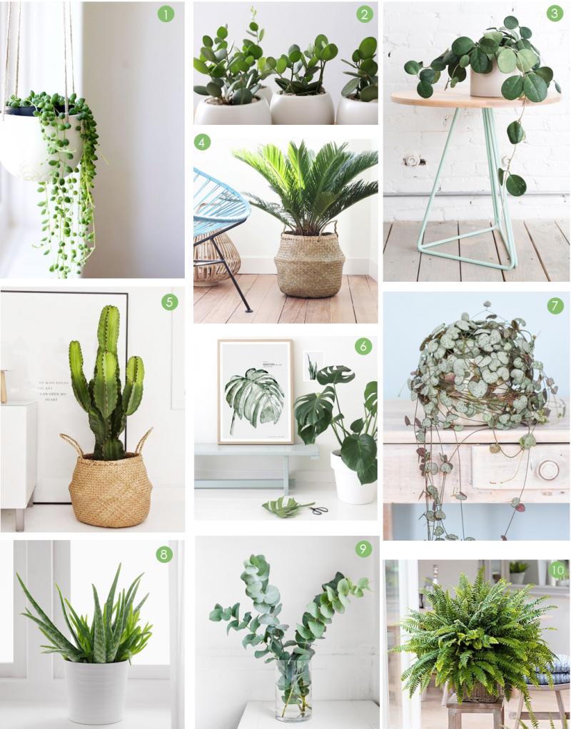 Plante D Intérieur Tendance 10 belles plantes pour décorer son intérieur - summer girl